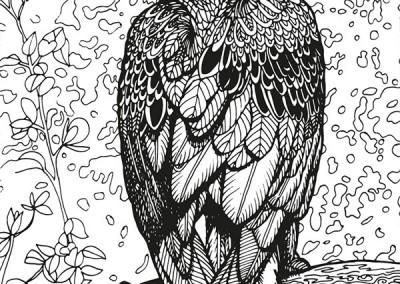aust-06-wedgetailedeagle
