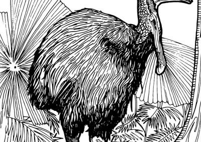 aust-14-cassowary