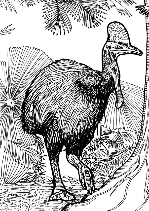 cassowary coloring pages - photo#14