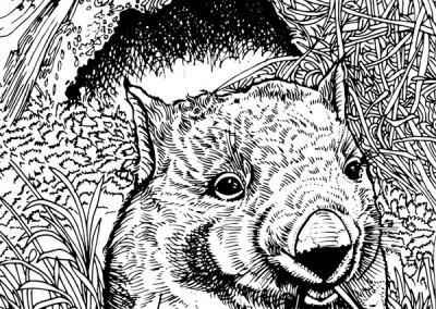 aust-17-wombat