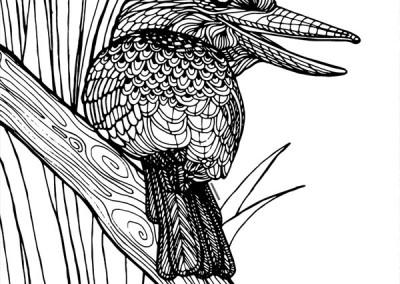 aust-19-kookaburra